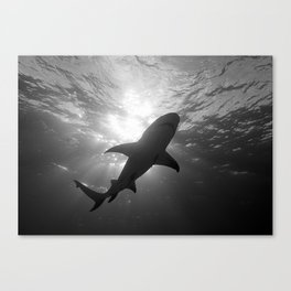 Shadows of the Old Gods Canvas Print