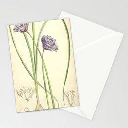 Flower 5912 milla capitata1 Stationery Cards