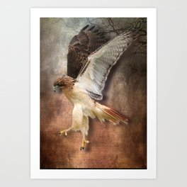 Red Tail Hawk in Vintage Light Art Print