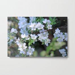 Hawthorn Wildflowers Metal Print