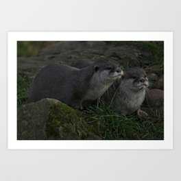 Otter Pair Art Print