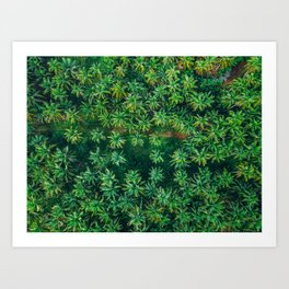A Winding Path Through The Palm Trees - Siargao, Philippines Art Print