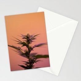 Macro cannabis kush photo Stationery Cards