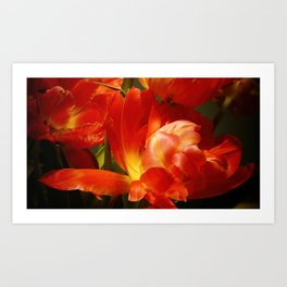 Red Parrot Tulips close up IV Art Print