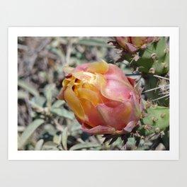 Pink Cactus Flower Art Print