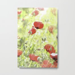 Poppies in the bright sunshine Metal Print