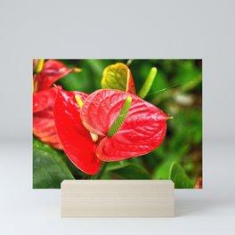 Popular tropical flower - shipped all over the world Mini Art Print