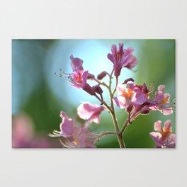 Primavera Canvas Print