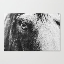 Wild Blue Eyed Horse - Black and White Canvas Print