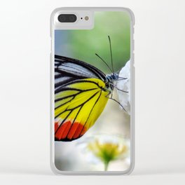 Asian Painted Jezebel butterfly Clear iPhone Case