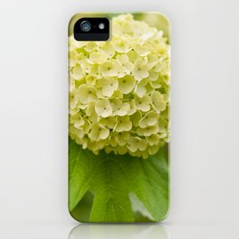 Viburnum opulus Roseum inflorescence iPhone Case