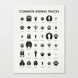 Common Animal Tracks Canvas Print