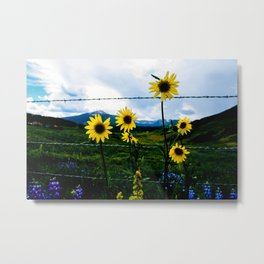 Mountain Sunflower in Crested Butte Metal Print