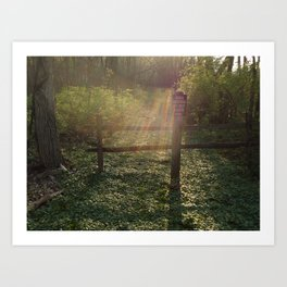 Peaceful Forest Bed Art Print