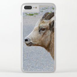 A female big horn works it for the camera in Jasper National Park Clear iPhone Case