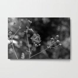 Black and white rose on bokeh background Metal Print