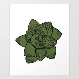 Succulent Art Haworthia Succulent Art Print