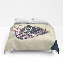Morpho Comforters