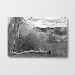 Fallen Cottonwood Metal Print