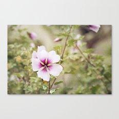 Solo Bloom Canvas Print