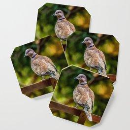 Collared Dove Coaster