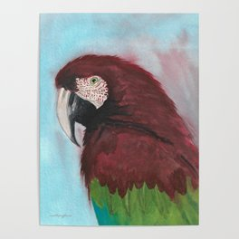 Red Macaw Poster