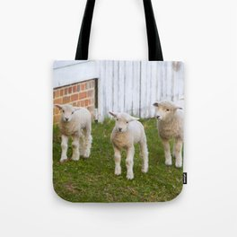3 Little Lambs Tote Bag
