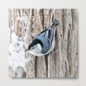 White-breasted Nuthatch by nancyacarter