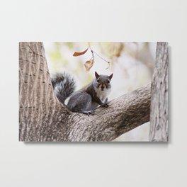 Cute squirrel Metal Print