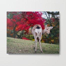Deer in Nara Park Metal Print