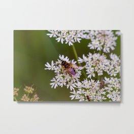 Bee relaxing on a flower. Metal Print