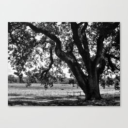 Under the Santa Rosa Sun Canvas Print