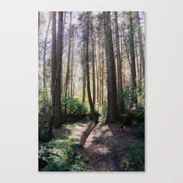 Yosemite woods Canvas Print