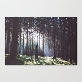 Magic forest - Landscape and Nature Photography Canvas Print