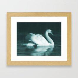 Lone Swan Framed Art Print
