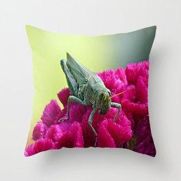 Grasshopper on Cockscomb Throw Pillow