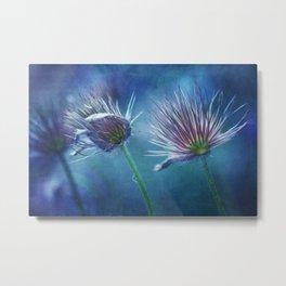 spring pasque flower Metal Print