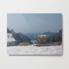 Mountain Goats of Montana Metal Print