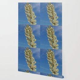 Soap Yucca Blossoms Wallpaper
