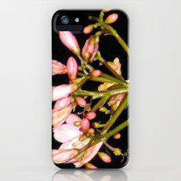 Flowering Pink Jatropha iPhone Case