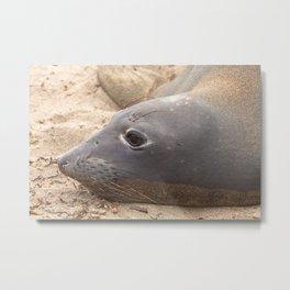 Elephant Seal Metal Print