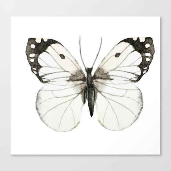 Butterfly 07 Canvas Print