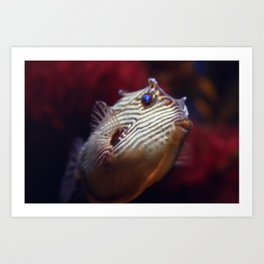 cowfish Art Print