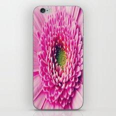 Gerbera Macro iPhone & iPod Skin