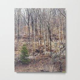 a little evergreen Metal Print