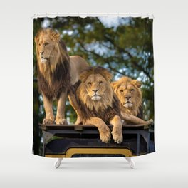 Lion Kings of the Serengeti, Africa Shower Curtain