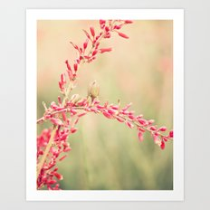 May Flower Art Print