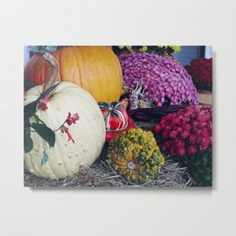Assorted Pumpkins and Gourds for Autumn Metal Print