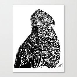 A Swift Eye Canvas Print