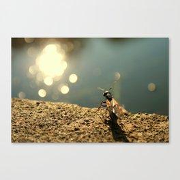 Pond Watcher Canvas Print